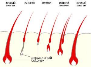 корни ресниц
