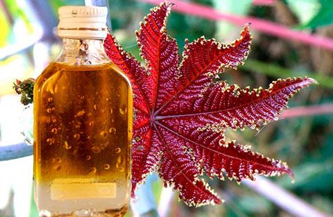 экстракт репейного масла